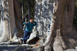 2012-nev--mt-charleston--gavin